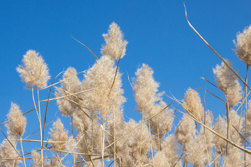 Natural background. Dry fluffy autumn grass
