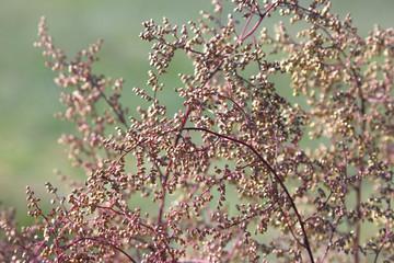Natural background. Closeup of red autumn grass