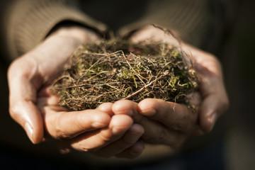 human hands holding a little nest