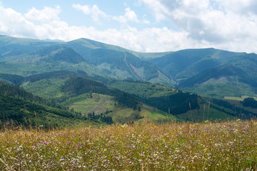 Summer landscape in the Ukrainian Carpathians