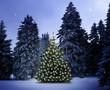 canvas print picture - Weihnachtsbaum im Wald