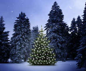 Weihnachtsbaum im Wald