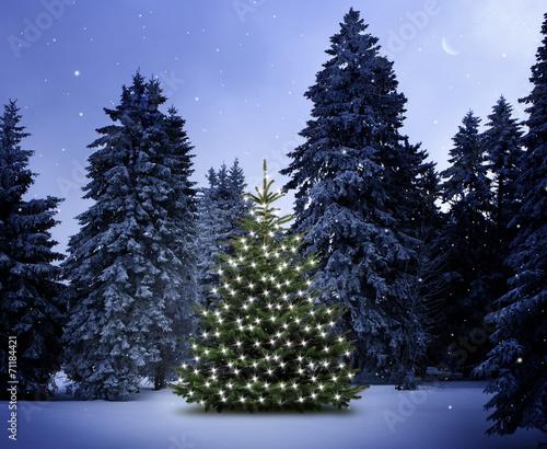 canvas print picture Weihnachtsbaum im Wald