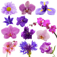 Collage of beautiful purple flowers