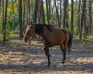 Horse, Ukraine, Dnipropetrovsk region. October 2014.
