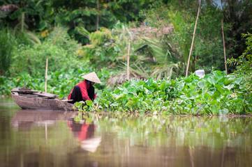 Donna Vietnamita mentre raccoglie ortaggi sul fiume Mekong