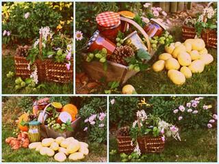 composition,récolte cueillette  au potager
