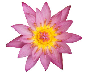 Pink Waterlily on white background with clipping path