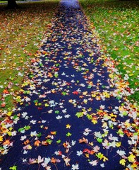 Autumn leaves on a footpath after a shower of rain