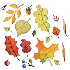 Vector Watercolor autumn Leaves set