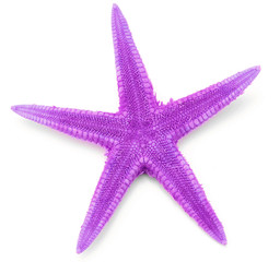 Lilac seastar, isolated on white background.