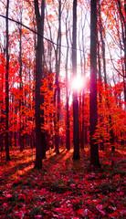 autumn © lilit