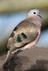 Dove Portrait