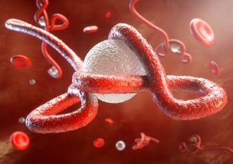 Ebola Virus in Aktion