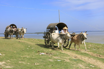 Ox carts for tourists in Mingun, Mandalay region, Myanmar