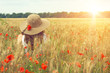 poppies field - 71199009