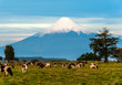 Idyllic landscape of Osorno Volcano, Lake Region, Chile - 71200600