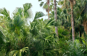 lush green palm trees.