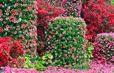 Flower lawn.