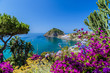 Ischia and Bougainvillea glabra - 71202683
