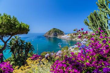 Ischia and Bougainvillea glabra