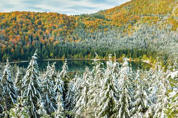 Snowy trees and colorful autumn landscape,St Anna lake,Romania