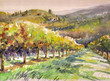 Vineyard,watercolors