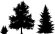 one small and two large fir silhouettes on white