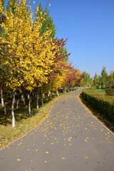 A curved path with colourful trees in autumn
