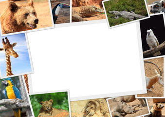 Frame with collection of wild animals photography