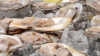 Fresh oysters close up