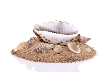 Muszle z piaskiem na białym tle
