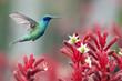 canvas print picture - colibri