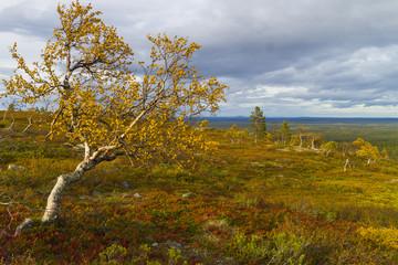 Autumn ruska
