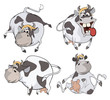 Happy cows.Clip-Art. Cartoon
