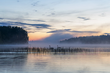 fog over a lake
