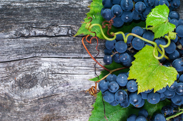 Bunch of  grapes on wooden background with copy space