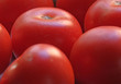 canvas print picture - Tomaten