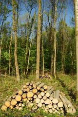 Tas de rondin de bois,Aisne