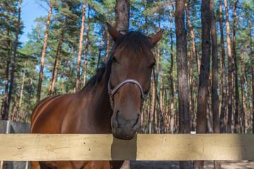 Horse, Ukraine, Dnipropetrovsk region. October 2014.