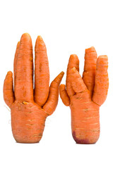 Unusual crop of carrots