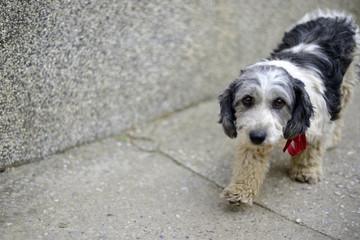 Cute stray dog with sad look
