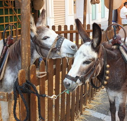 Donkeys At The Fair