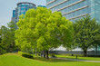park with a big tree in the city - 71224475