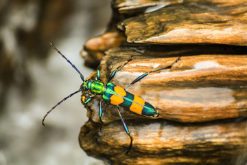 green yellow insect