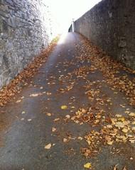 salita di foglie in autunno