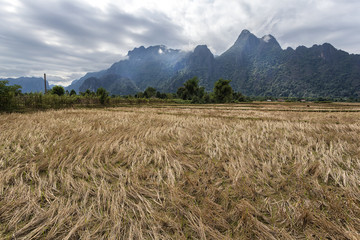 Rice field and mountians in Vang Vieng, Laos.