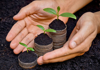 hands holding trees growing on coins / csr
