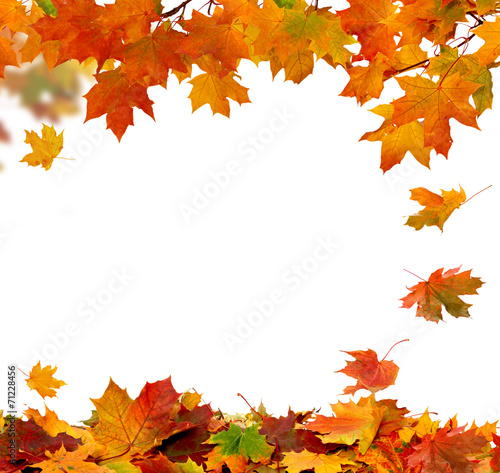 Papiers peints Arbre Autumn falling leaves isolated on white background
