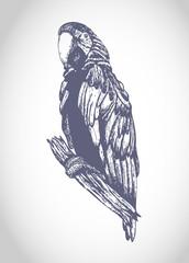 Sketch parrot illustration